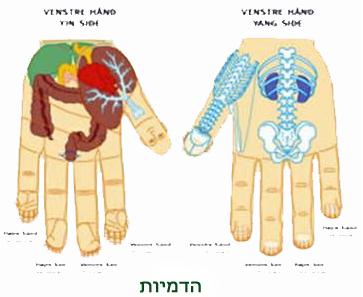 סו ג'וק - טיפול בהדמיות הידיים, הדמיה סטנדרטית.