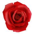 מיצוי מי ורדים וסיבים תזונתיים לקליטת פרוביוטיקה וכן ליציאות תקינות